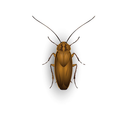 insect stickers for ios10 messages